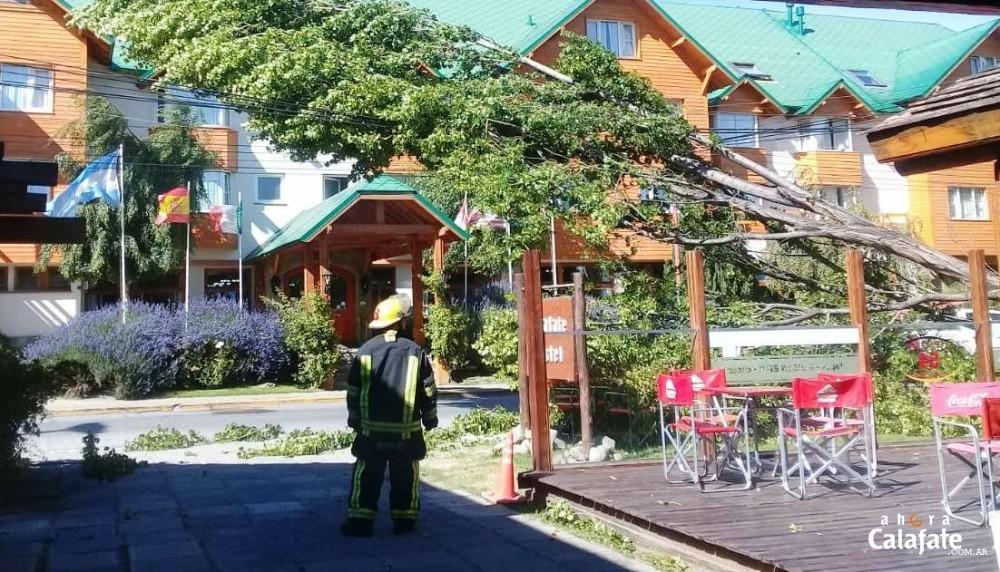 Caída de un árbol dejó sin luz a varios sectores