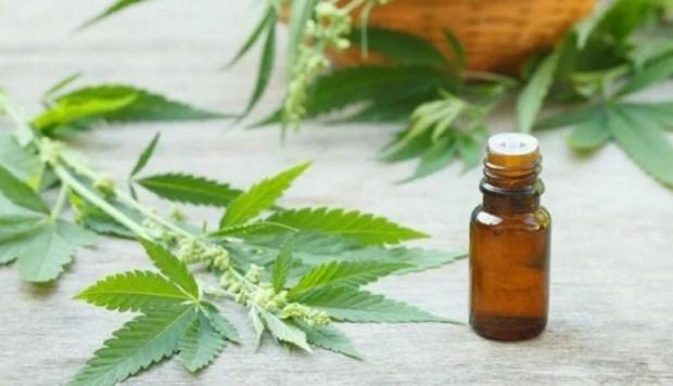 Gobierno reglamentó la producción de aceites de cannabis