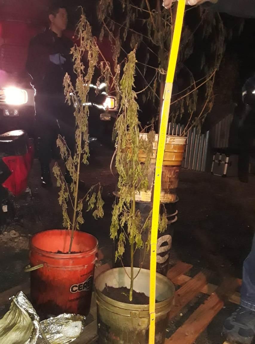 Se les incendió la casa. Adentro encontraron plantas de marihuana y un arma