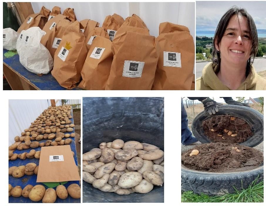 Exitosa cosecha en la huerta escolar de la Fundación Valdocco.