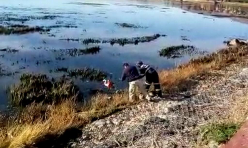 """VIDEO: Fueron a caminar y terminaron siendo los """"héroes del día"""""""