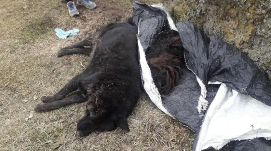 Más de 60 perros y aves murieron envenenados