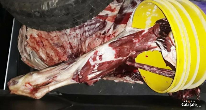 Decomisan más de 40 kilos de carne vacuna y de caballo