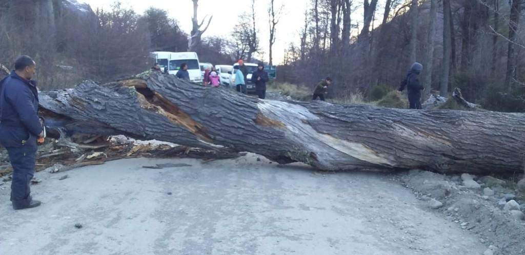Caída de un árbol cortó el tránsito al Lago del Desierto